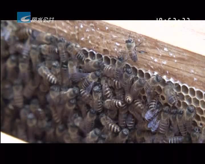 """我市""""蜜蜂产业生态圈""""项目获全国赛铜奖"""