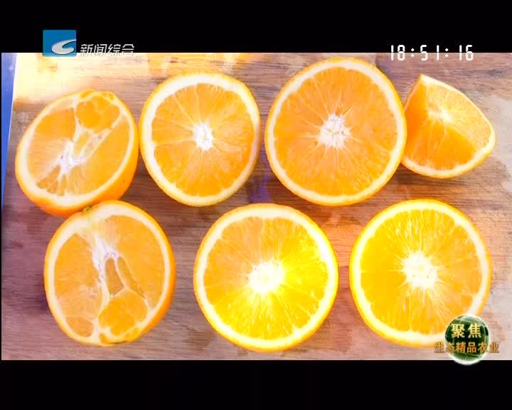 """【聚焦生态精品农业】陈森魁:二十年的赤""""橙""""心"""