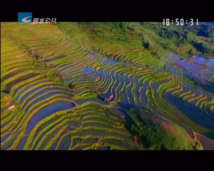 【千村示范 万村整治】云和崇头镇:美了环境 富了农家