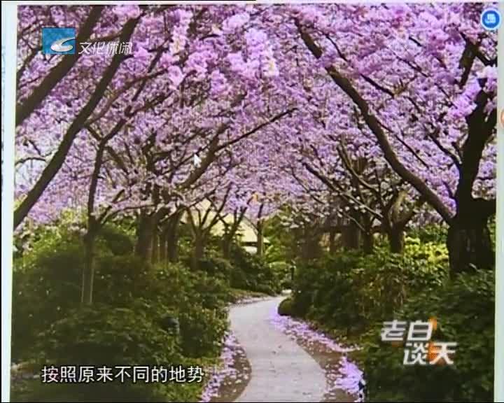 太棒了!南明湖边打造樱花公园