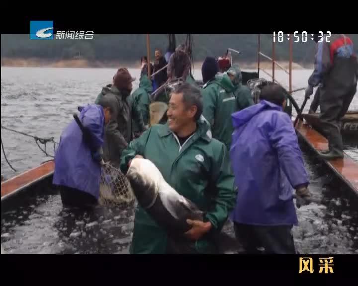 【风采】云和有机鱼卖得欢