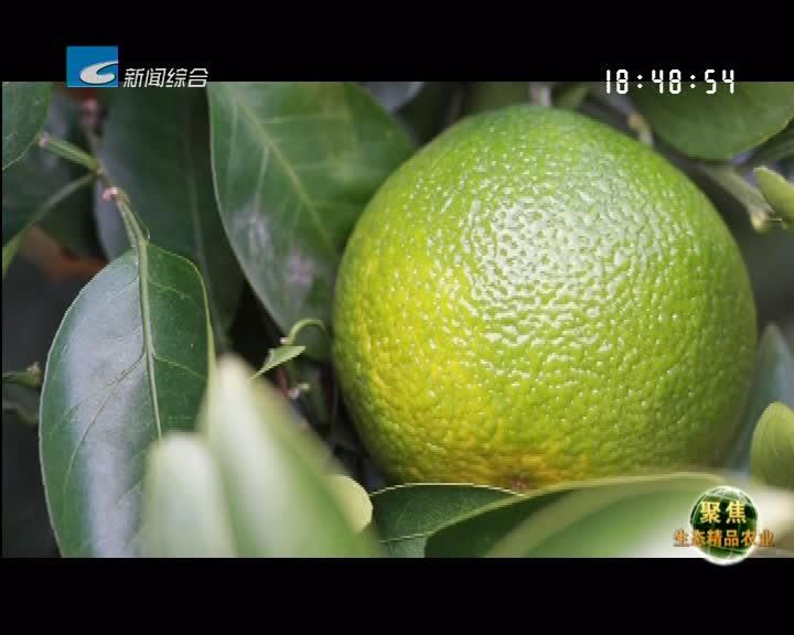 【聚焦生态精品农业】网红果:甜橘柚