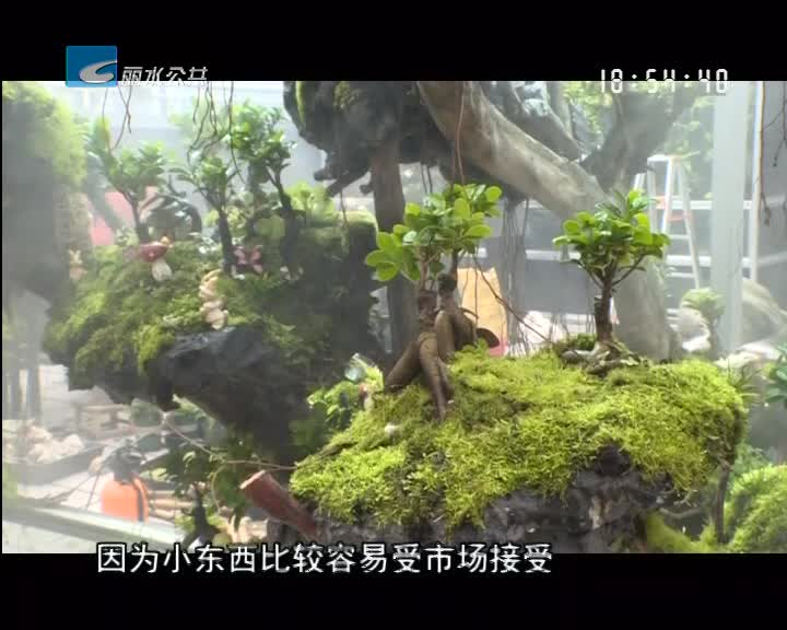 """【奇思妙想创业记】温从发:小苔藓大梦想 打造""""中国苔藓之乡"""""""