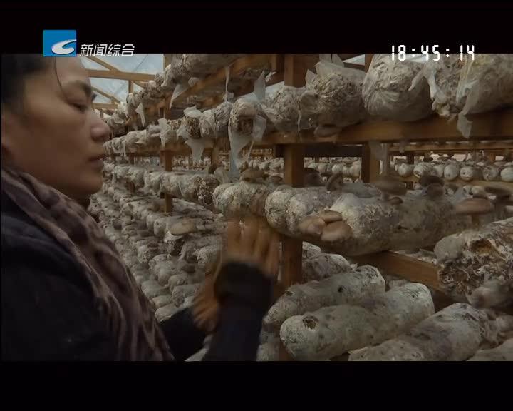 【聚焦生态精品农业】庆元县:多举措力促香菇产业发展