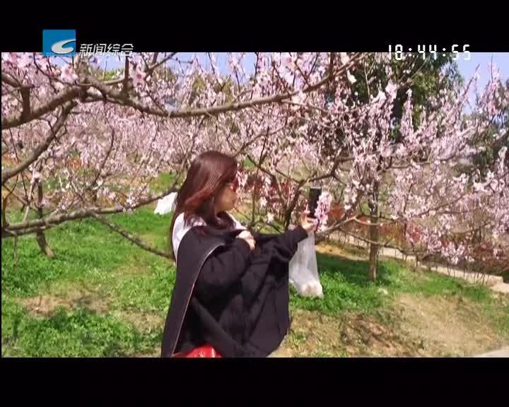 【一起去旅行】赴桃花之邀  享春光之美