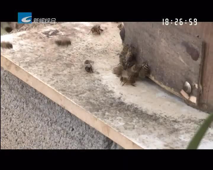 """【瓯江警视】蜜蜂""""飞""""哪儿去了?"""