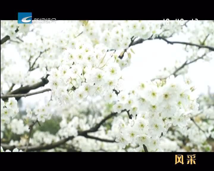 【风采】缙云双龙:一片梨园写就乡村振兴传奇