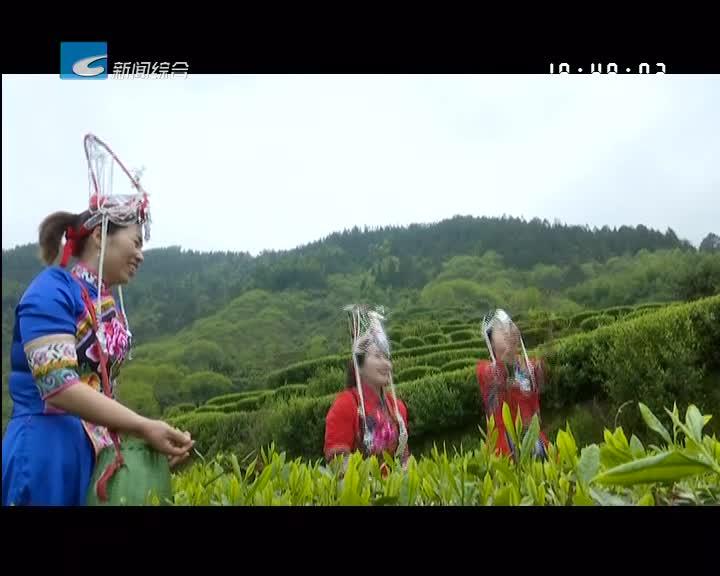 【一起去旅行】松阳板桥:歌舞蹁跹三月三  和美畲乡入画来