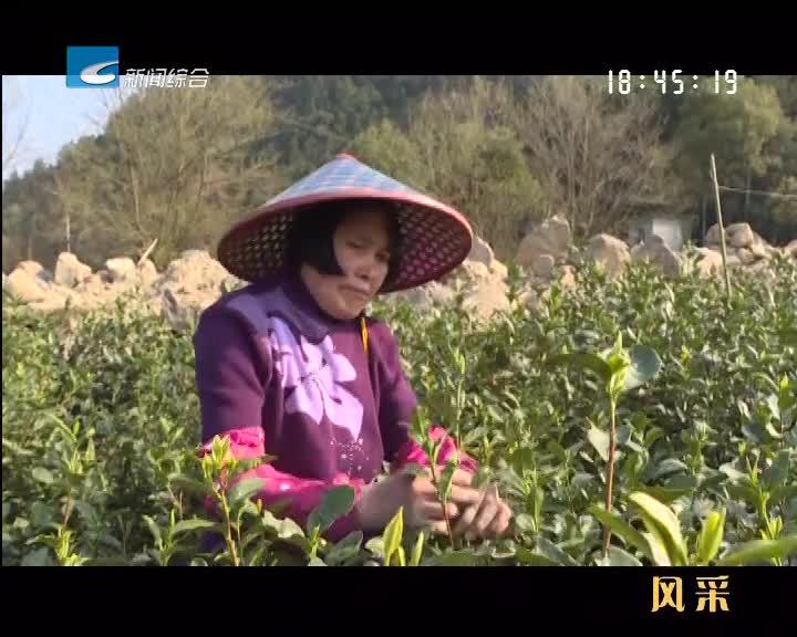 【风采】品一口茶 抓住春天的滋味