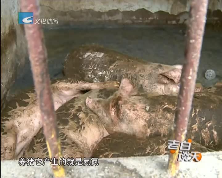 民俗乐园有人养猪 相关部门严查