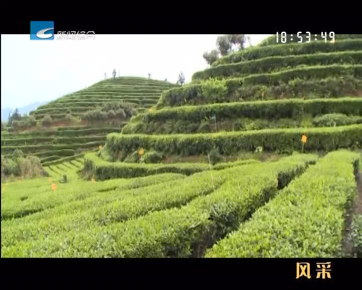 【风采】以茶为媒  以茶问道  遂昌:一片叶子的绿色高质量发展之路