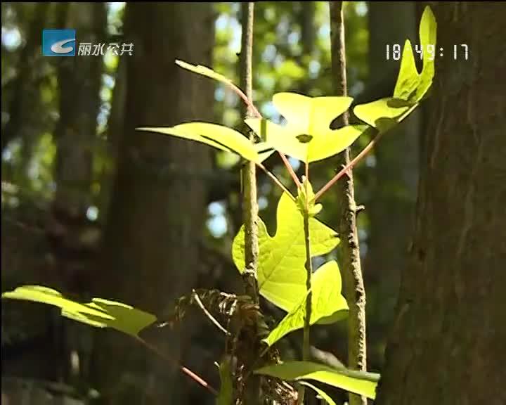 中国林学会森林疗养专家到白云森林公园进行森林康养基地实证