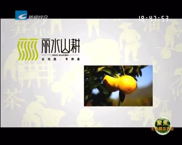 【聚焦生态精品农业】刘俊:摘尽枇杷一树金
