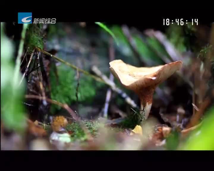 【健康丽水】舌尖上的风险 毒蘑菇毒你没商量