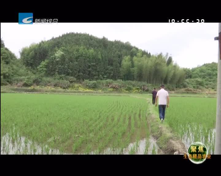 【聚焦生态精品农业】多变插秧助农耕