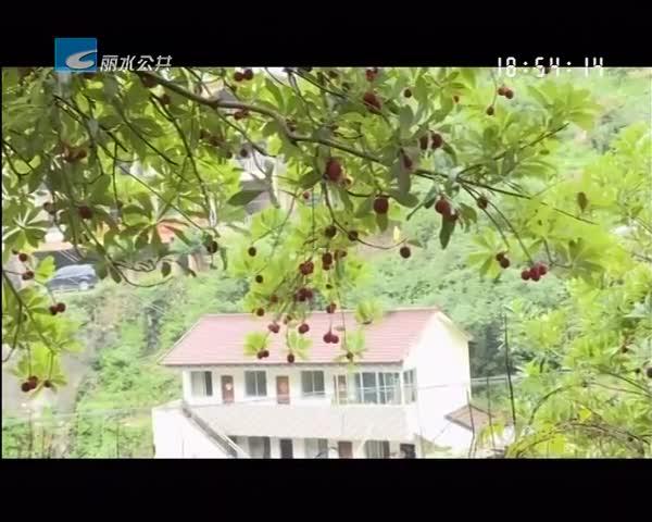 枫树湾村杨梅节开幕 闹了乡村富了农民