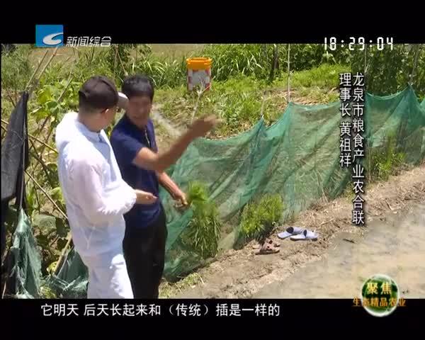 【聚焦生态精品农业】