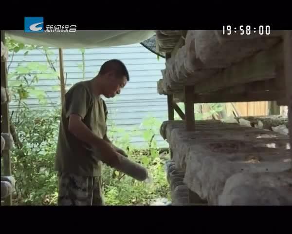 """《""""老兵""""风采和寻找丽水""""麦香""""》系列报道:黄金明:保持军人本色 扎根家乡谋发展"""