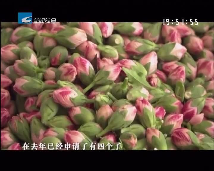 """处州丰收季:遂昌:小小木槿花""""开出""""千万产业"""
