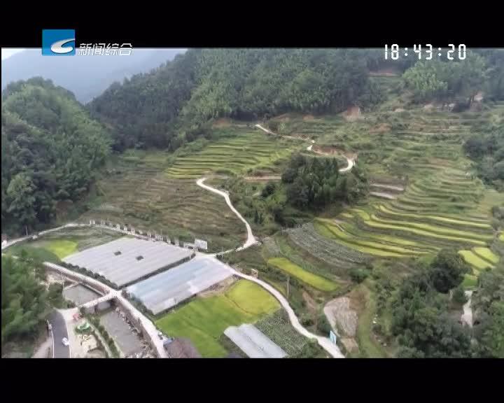 【一起去旅行】龙泉城北乡:赏城北美景 享桃园盛宴