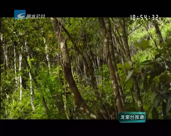 龙泉一企业入选全国森林康养基地试点建设单位