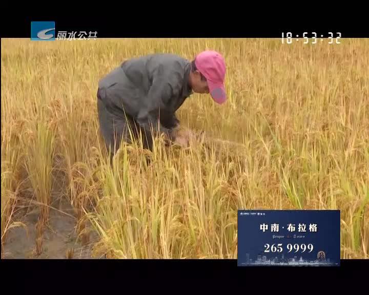 【大花园里的幸福事】稻谷飘香迎丰收 游客体验传统农耕