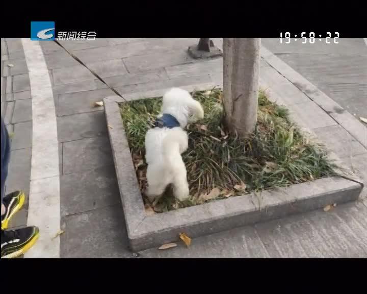 【每周聚焦】聚焦:让文明养犬成为社会共识