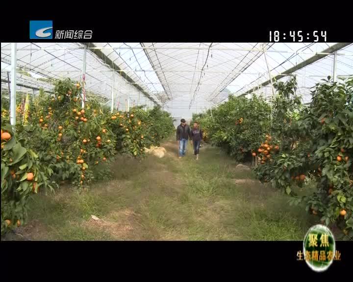 """【聚焦生态精品农业】""""娇""""""""贵""""的红美人"""