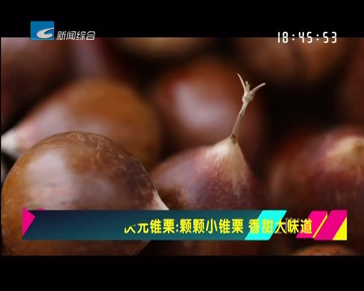 【寻味】庆元锥栗:颗颗小锥栗 香甜大味道