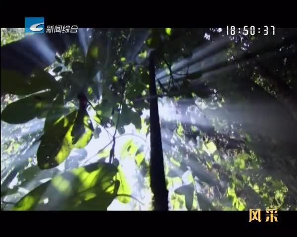 """【风采】景宁大均:绿水青山真""""有价"""""""