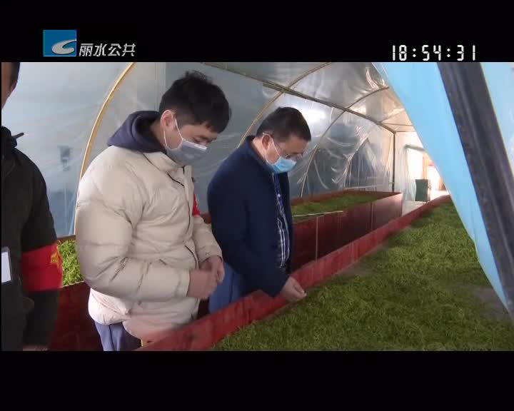 稳生产 保民生:松阳茶产业复工复产 干部指导监督保驾护航