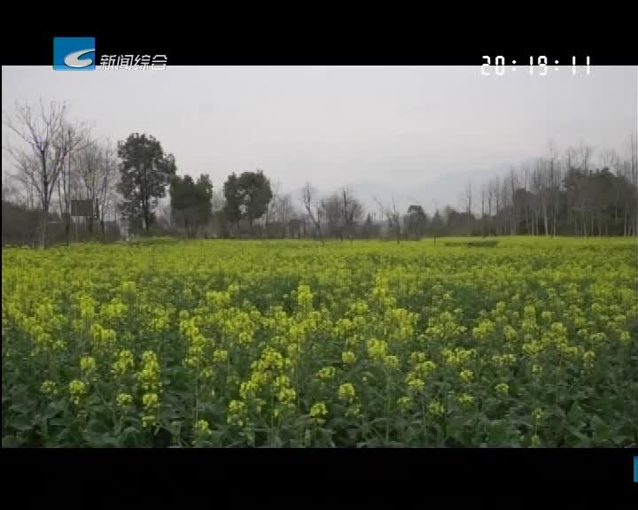 云游丽水:松阳:南城春意浓 处处花似锦