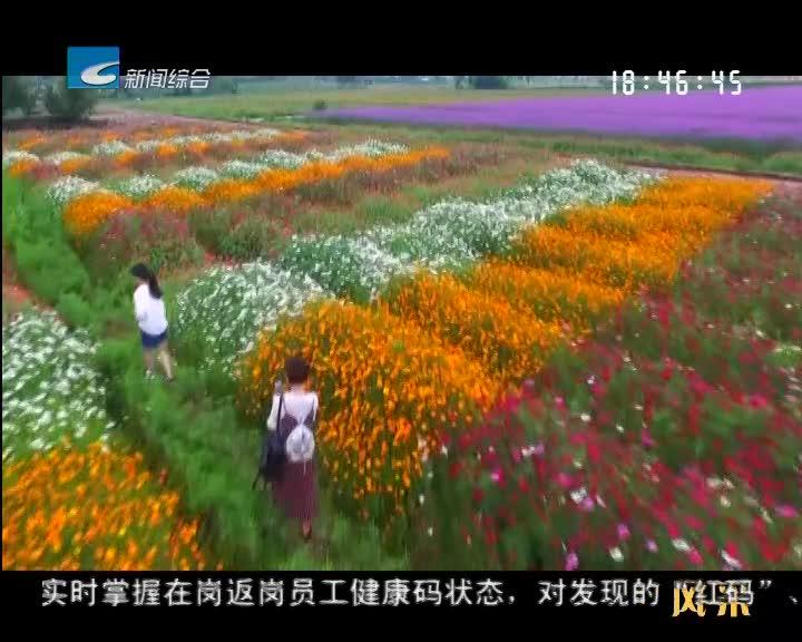 【风采】丽水:四好农村路  乡村振兴幸福路