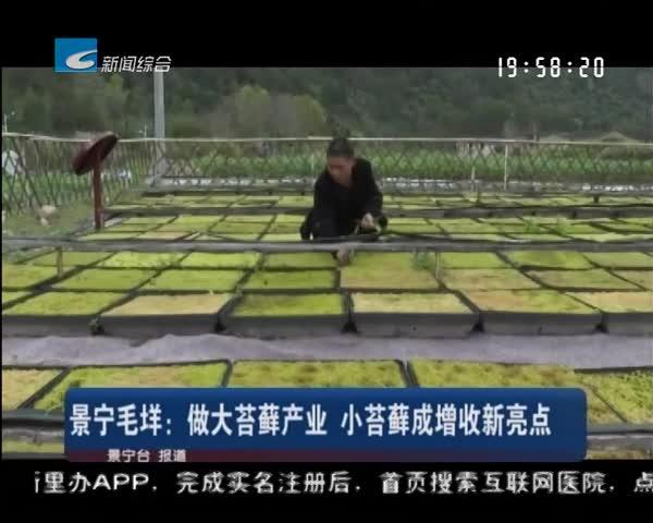 景宁毛垟:做大苔藓产业 小苔藓成增收新亮点