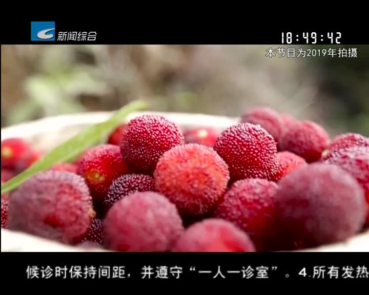 【寻味】青田:杨梅红了 酒浓了