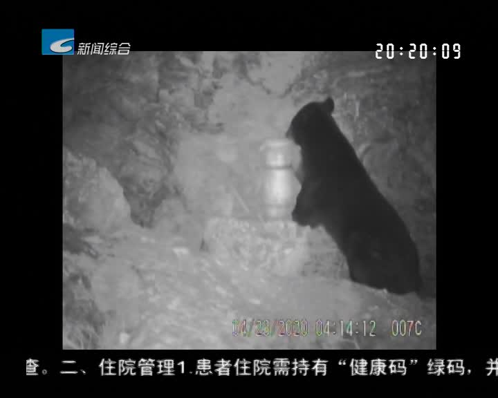 """遂昌九龙山:黑熊爬峭壁 """"偷""""吃蜂蜜"""