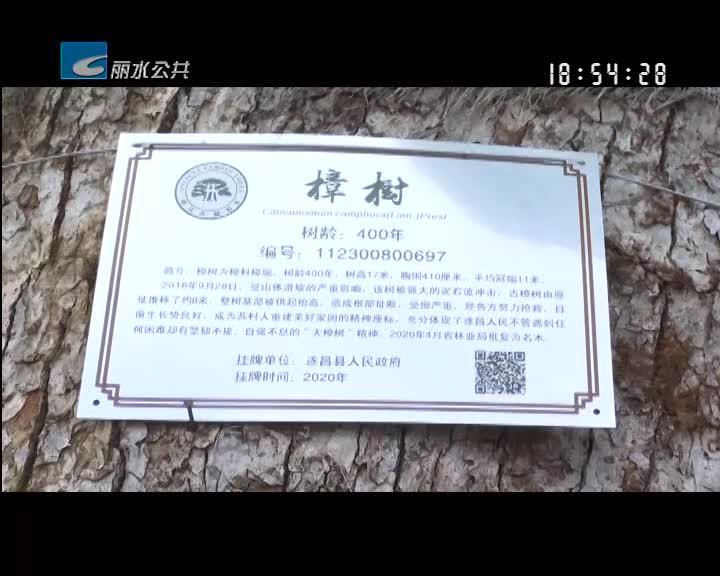 """遂昌:为古树名木挂牌 聘请专门""""管家"""""""