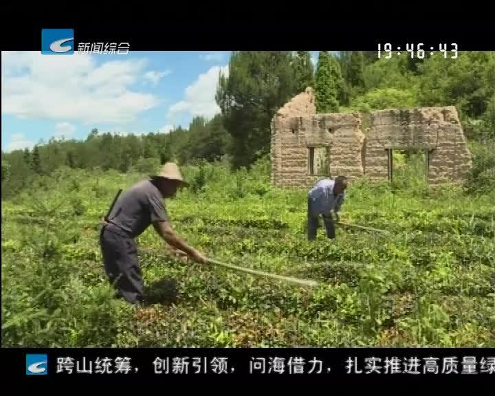 抓好大花园建设 谱写绿色发展新篇章:景宁梧桐乡:打造千亩生态茶园 带动绿色产业发展