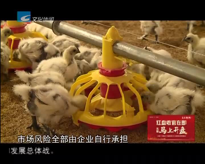 """【诚信是金】企业诚信兑现""""合同鸡"""" 确保农户养鸡无风险"""