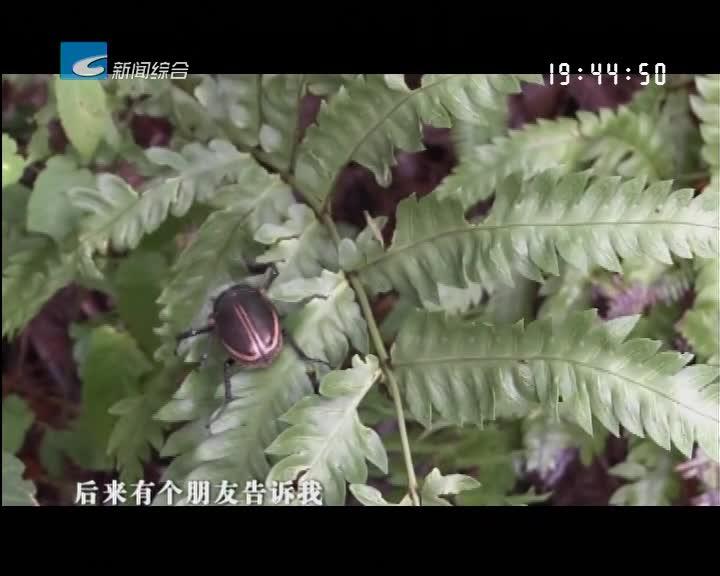 创建百山祖国家公园:保护区首次发现国家二级保护动物—----阳彩臂金龟
