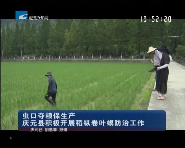 虫口夺粮保生产 庆元县积极开展稻纵卷叶螟防治工作