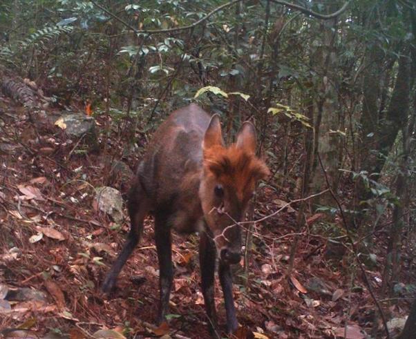 这些红外相机 拍下好多难得一见的野生珍稀动物