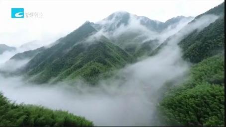 【风采】龙泉:金融助力生态产业数字化改革